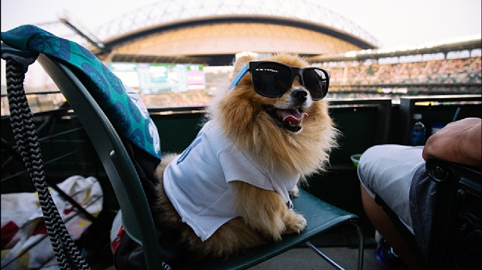 Mariners fans treated to near-record amount of sunshine this summer